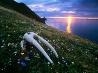 セイウチの頭骨、ブリストル湾