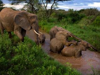 サンブル国立保護区のゾウ、ケニア