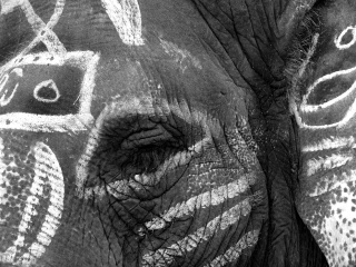 ゾウ、インド