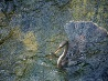 ヘビウ、エバーグレーズ国立公園