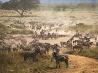 シマウマの大移動、タンザニア