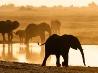 ゾウの群れ、ボツワナ