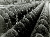 爆撃機の製造工場、カリフォルニア州
