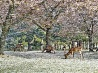桜吹雪、奈良
