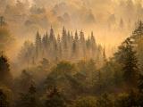 森の朝、ドイツ