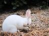 ウサギ、オレゴン州
